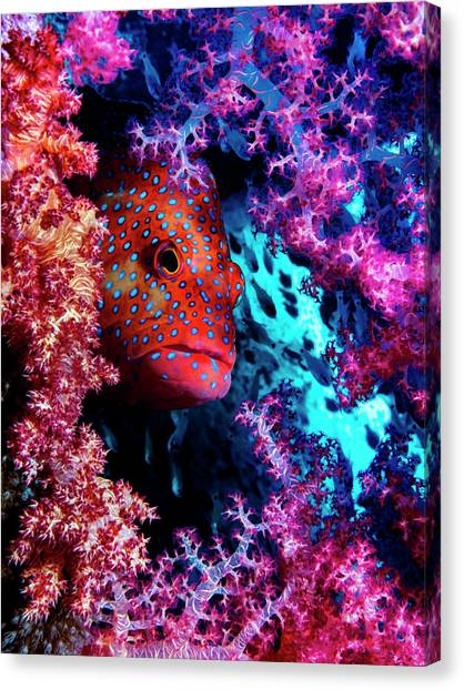 Coral Reefs Canvas Print - Coral Hind by Dani Barchana