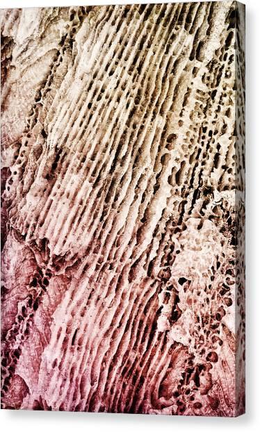 Coral Rock Close Up Canvas Print