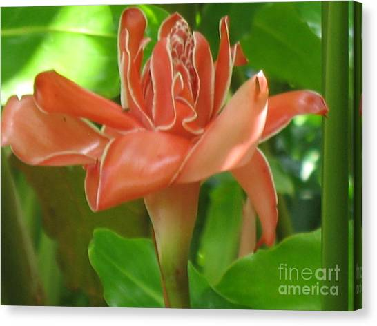 Coral Torch Canvas Print