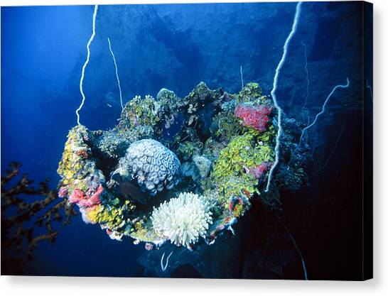 Corals On Ship Wreck Canvas Print