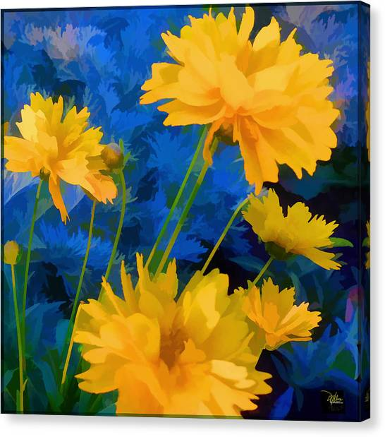 Coreopsis - Yellow And Blue Canvas Print