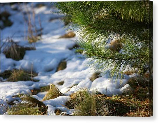 Canberra Canvas Print - Corin Forest Soft Snow by Denis Hawkins