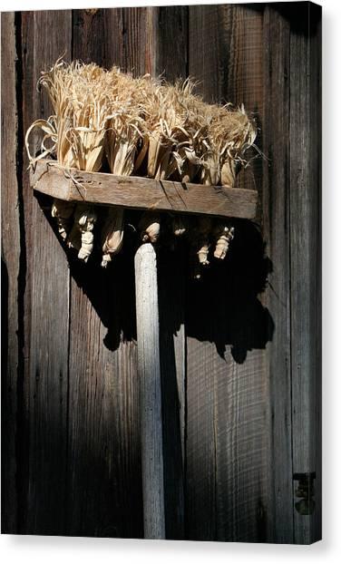 Broom Corn Canvas Prints   Fine Art America