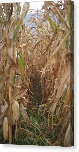 Corn Maze Canvas Print - Corn Field by Crystal Harman