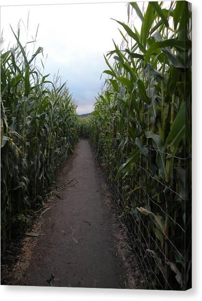 Corn Maze Canvas Print - Corn Maze by April Hendricks