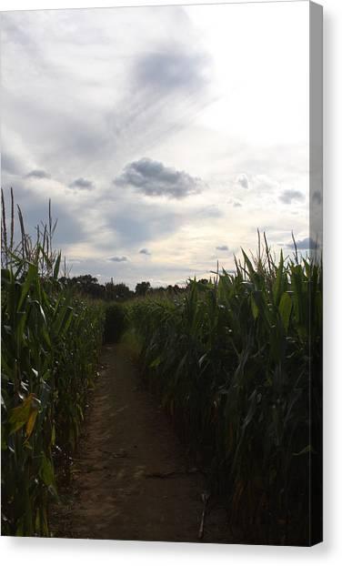 Corn Maze Canvas Print - Corn Maze by Vadim Levin