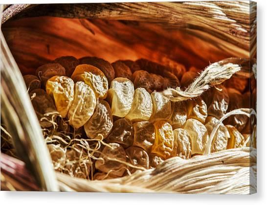 Vegetable Garden Canvas Print - Corncave by Susan Capuano