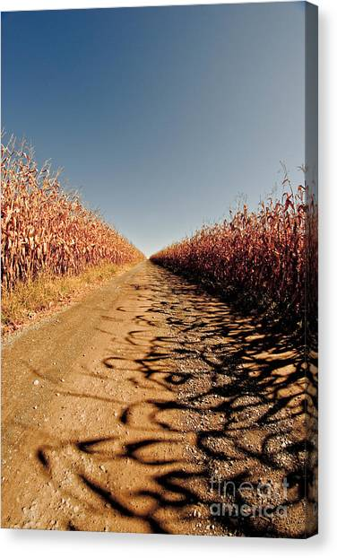 Corn Maze Canvas Print - Cornfield 2 by Pittsburgh Photo Company