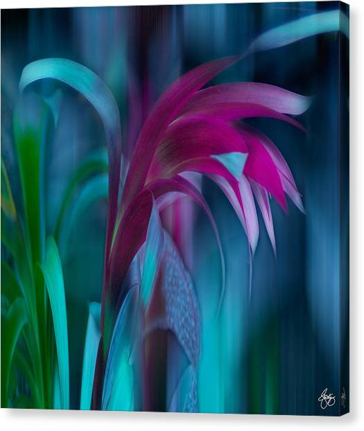 Cornflower Dreams Mindscape Canvas Print