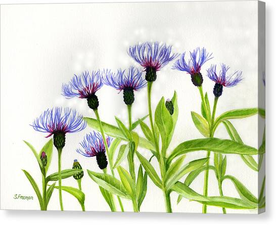 Bachelor Canvas Print - Cornflowers by Sharon Freeman