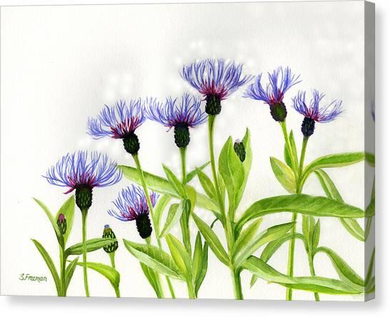 Bachelor Canvas Print - Cornflowers by Sharon Freeman