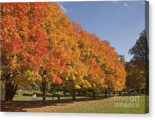 Corning Fall Foliage 2 Canvas Print