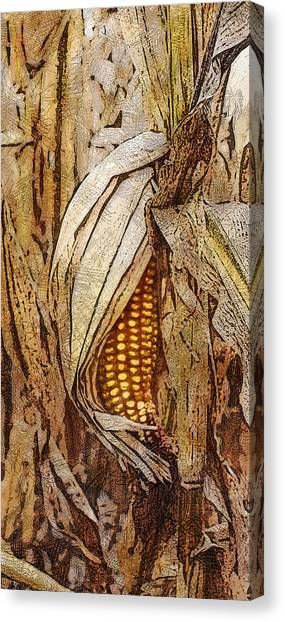 Corny Canvas Print