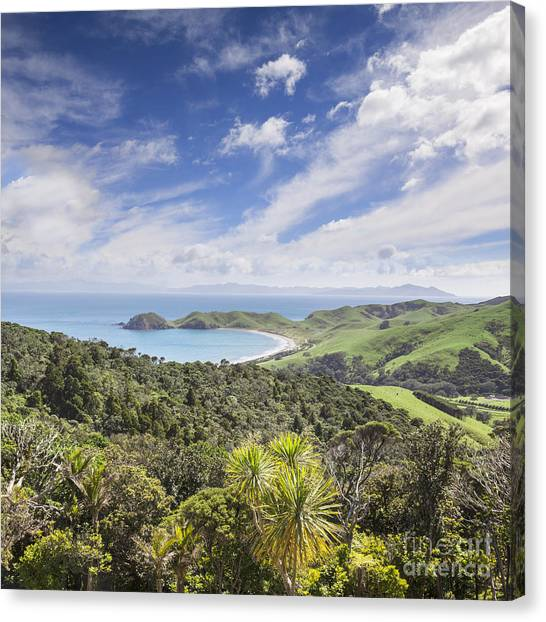 Coromandel Port Jackson New Zealand Canvas Print