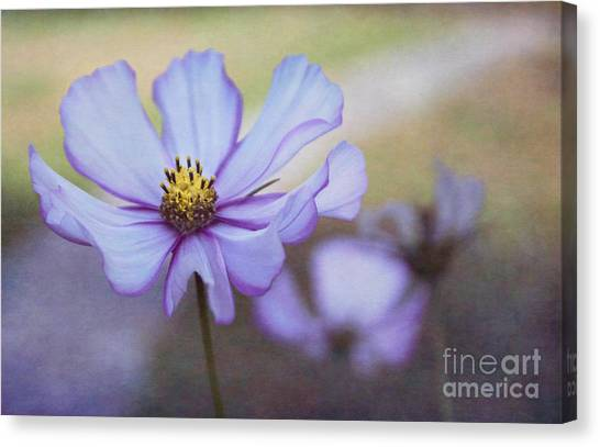Cosmos Dream Canvas Print