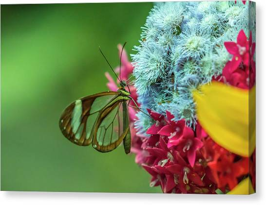 Monteverde Canvas Print - Costa Rica, Monteverde Cloud Forest by Jaynes Gallery