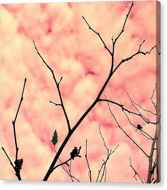 Minimalism Canvas Print - Cotton Candy by Courtney Haile