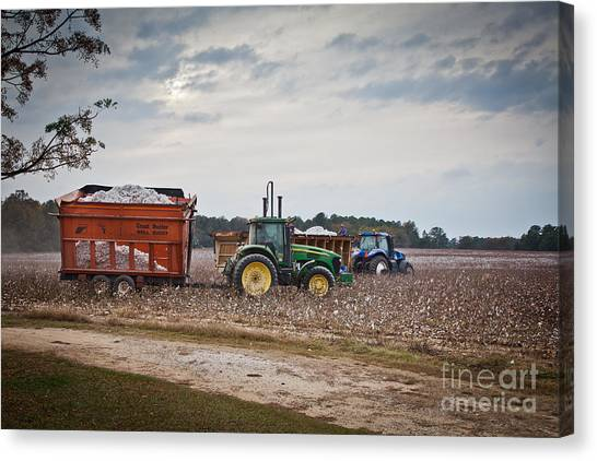 Cotton Harvest With Machinery In Cotton Field Canvas Print
