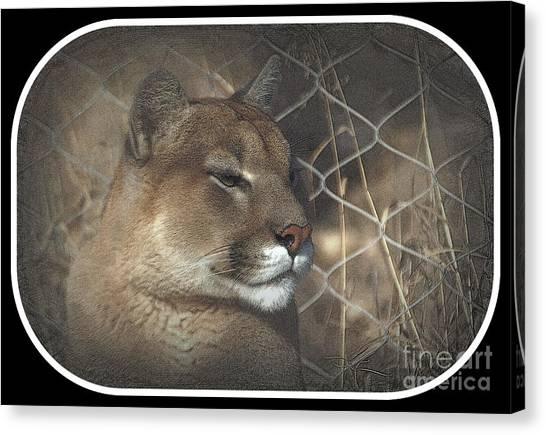 Cougar As Art 2 Canvas Print