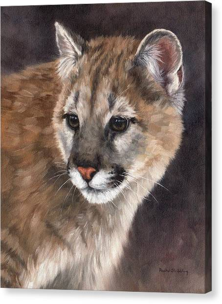 Cougar Cub Painting Canvas Print