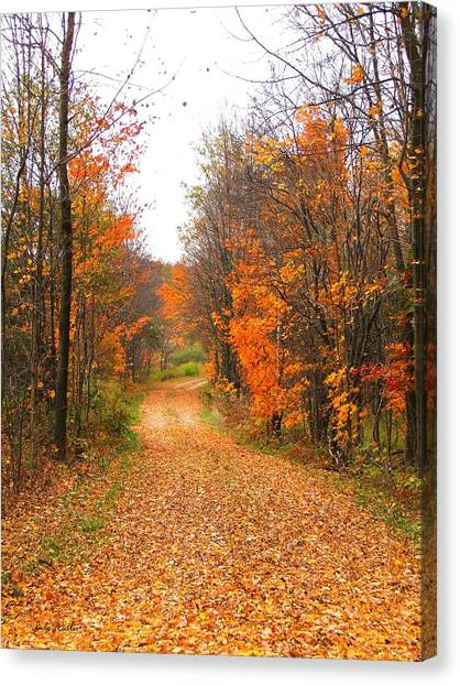 Country Road Canvas Print by Judy  Waller