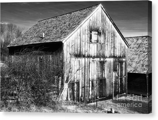 Country Time Canvas Print by John Rizzuto