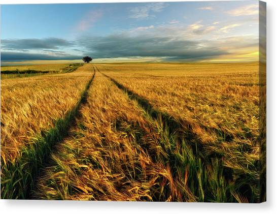 Wind Farms Canvas Print - Countryside by Piotr Krol (bax)