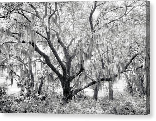 County Road 39 Canvas Print