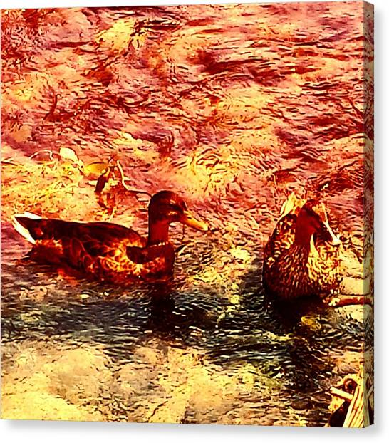 Water Birds Canvas Print - Couple Of Ducks by Jason Michael Roust