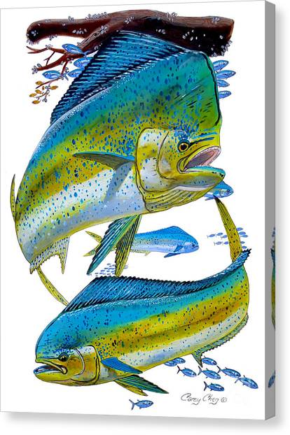 Sportfishing Canvas Print - Cow And Bull by Carey Chen