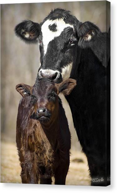 Cow And Calf Canvas Print by Elizabeth Vieira