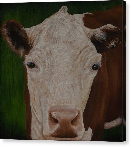 Cow Lick Canvas Print