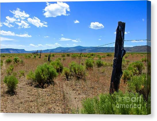 Cowboy Country Canvas Print by Tim Rice
