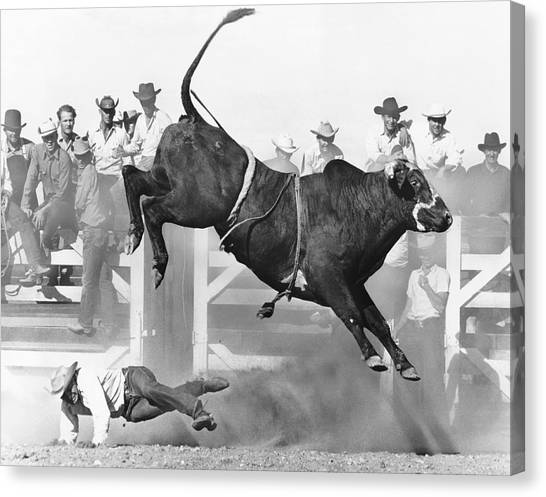 Bull Riding Canvas Print - Cowboy Riding A Bull by Underwood Archives