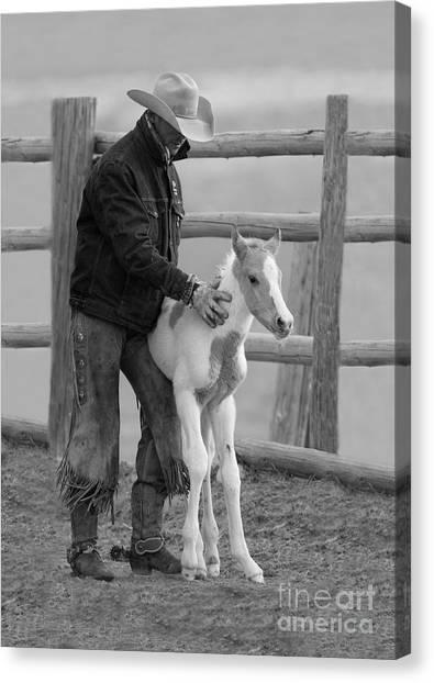 Cowboy Steadies Foal Canvas Print by Carol Walker