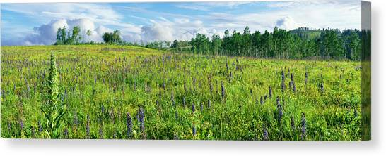 Teton National Forest Canvas Print - Cowparsnip And Larkspur Wildflowers by Panoramic Images