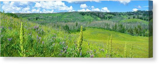 Teton National Forest Canvas Print - Cowparsnip, Lupine And Larkspur by Panoramic Images