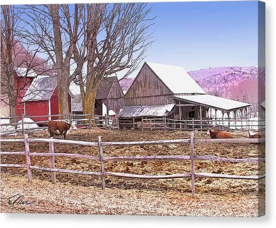 Cows At Jenne Farm Canvas Print