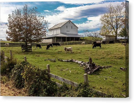 Cow Farms Canvas Print - Cows Graze In Grassy Field In Front by Panoramic Images