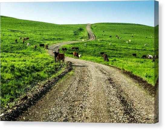 Cows On The Road Canvas Print