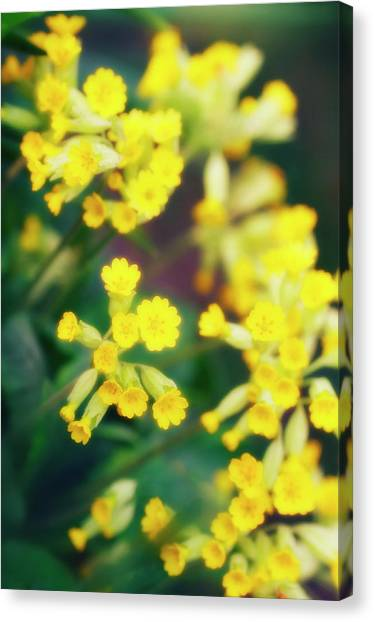 Perennial Canvas Print - Cowslip (primula Veris) by Maria Mosolova/science Photo Library