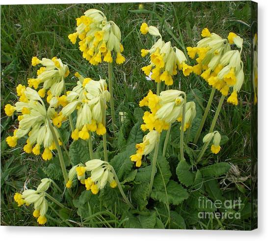 Cowslips Wildflowers. Canvas Print by Ann Fellows