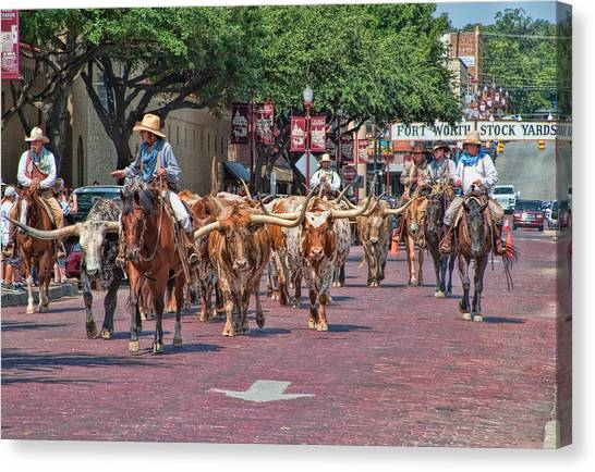 Cowtown Cattle Drive Canvas Print