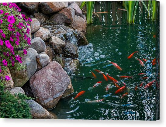 Koi Pond II Canvas Print