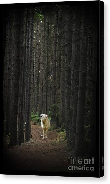 Coyote Howling In Woods Canvas Print