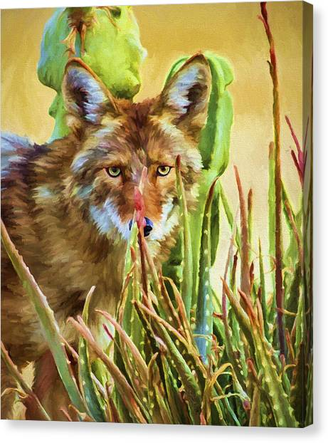 Arizona Coyotes Canvas Print - Coyote In The Aloe by David Wagner