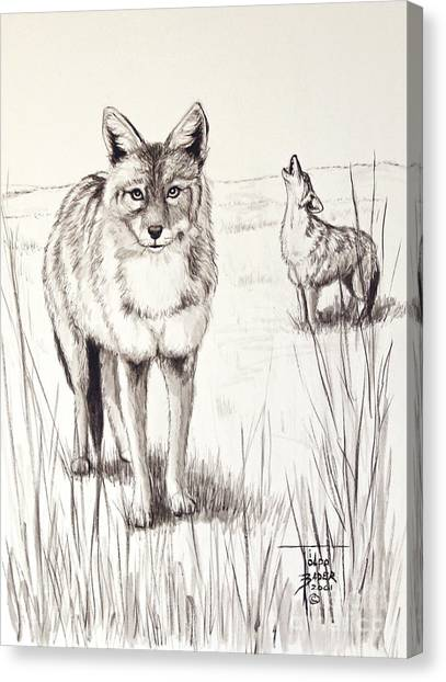 Coyote Life Canvas Print