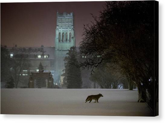 University Of Wisconsin - Madison Canvas Print - Coyote by Tom Lynn