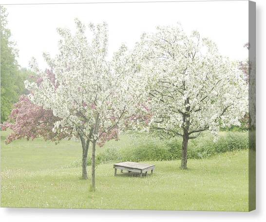Crab Apple Blossoms Canvas Print by Susan Crossman Buscho