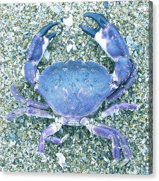 Salad Canvas Print - #crab #foodporn #dinner #seafood #food by Juan Parafiniuk